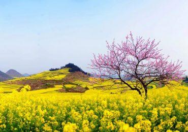 Tuyển Tập Hương Pháp Mùa Xuân
