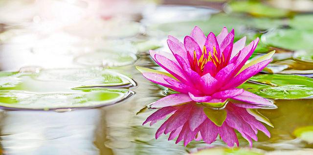 Nhạc Thần Chú Đức Quán Thế Âm Bồ Tát (tiếng Phạn) – Namo Ratna Trayaya