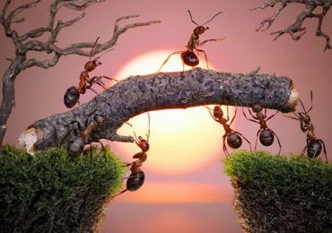 Đàn Kiến và Bức Tường